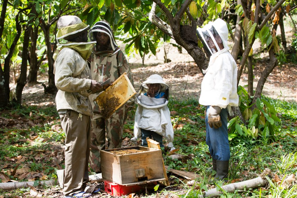 Bee Keeping in Grenada